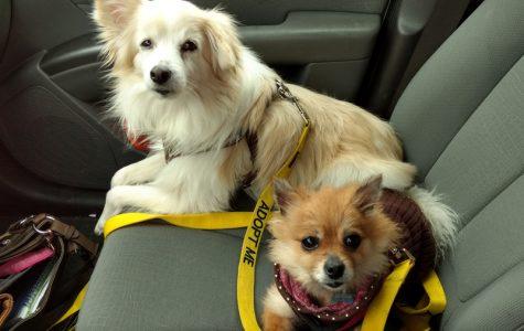 Math teacher fostered over 70 dogs