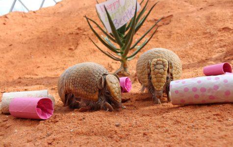 Animals can still thrive in captivity