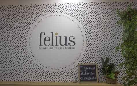 Felius Cat Cafe: The Cutest Coffee Shop in Omaha